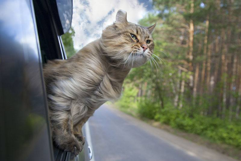 traveling with your cat in a camper