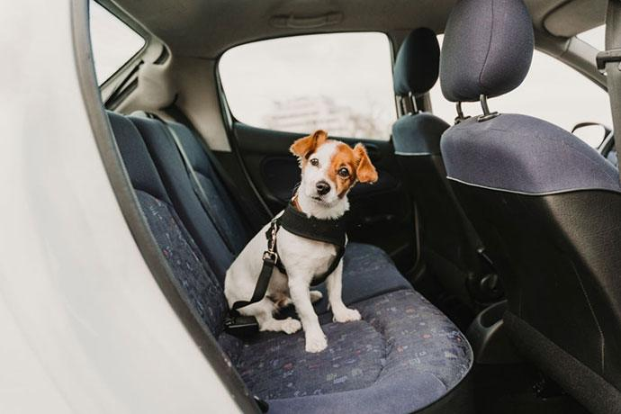 what is the best dog seat belt