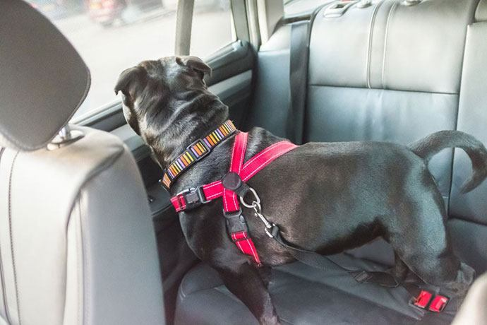 best pet car seat belt